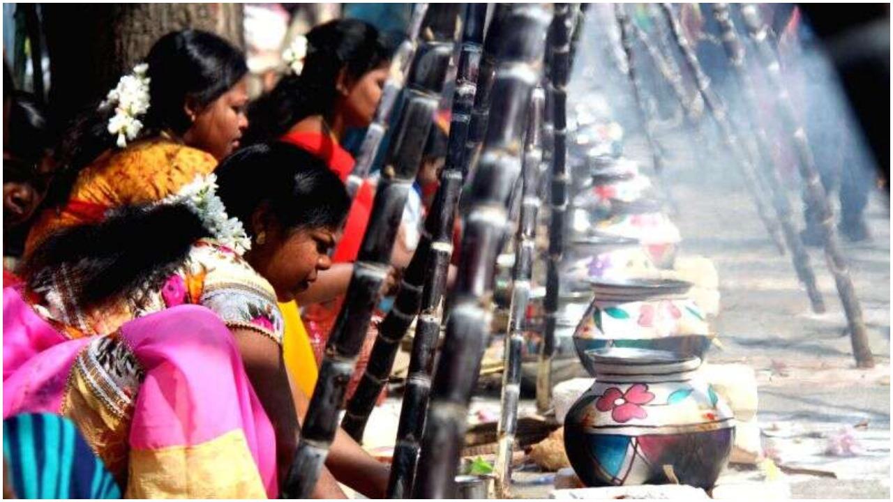 Pongal 2021: जानिए क्यों और कैसे मनाया जाता है पोंगल का त्योहार ?